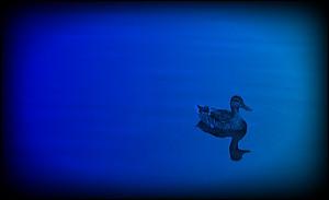 Duckcard1jpg